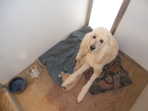 Barley chillin' in his kennel