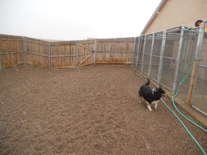 Willow Playing in one of our Exercise Yards